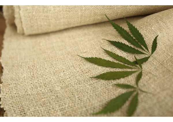Le textile de Chanvre, une solution écologique ?