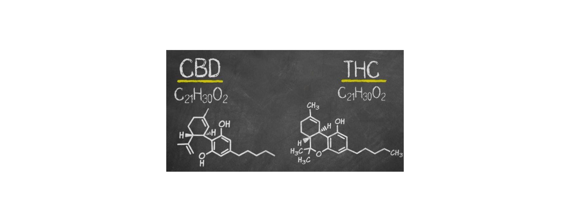 Quelle différence entre le CBD et le THC?