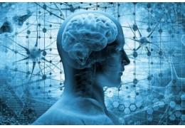 Le système endocannabinoïde c'est quoi?