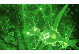 Le système endocannabinoïde: un pont entre le corps et l'esprit?
